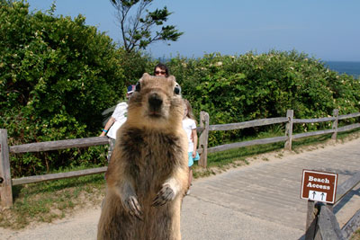 squirrel-beachroad