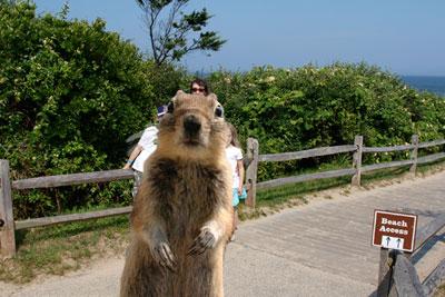 squirrel-beachroad