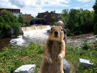 squirrel-falls